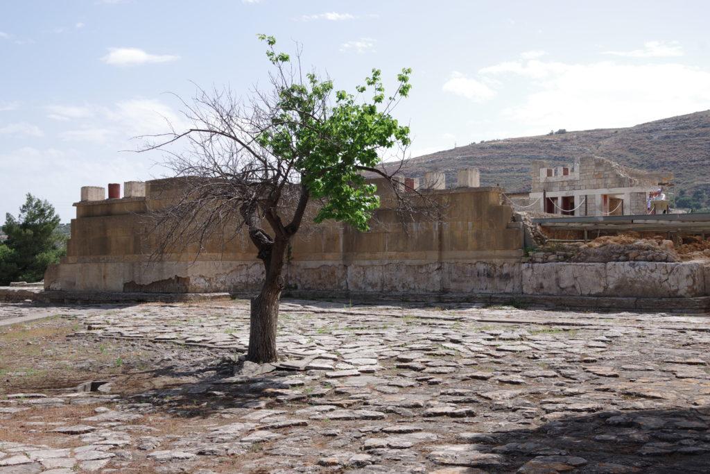 einzelner Baum auf Platz aus Steinplatten, dahinter Reste einer Ruine