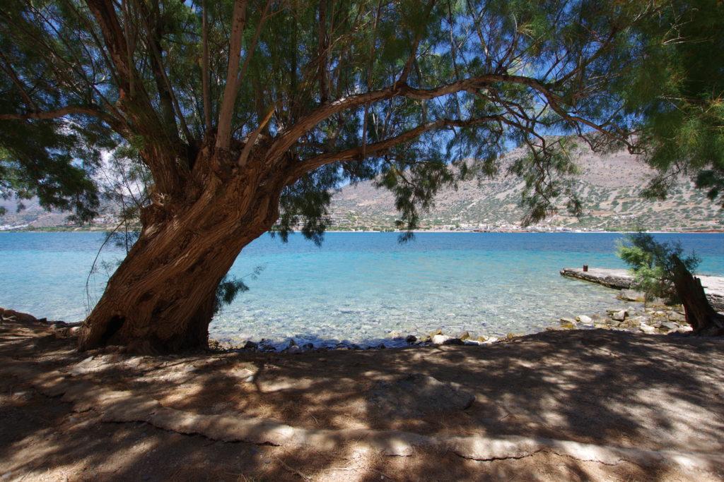 Baum wirft Schatten auf steinigen Strand, Blick aufs Meer, dahinter karger Küstenstreifen, sonniges Wetter