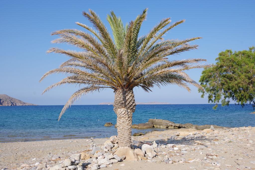 einzelne Palme am Strand mit Meer im Hintergrund
