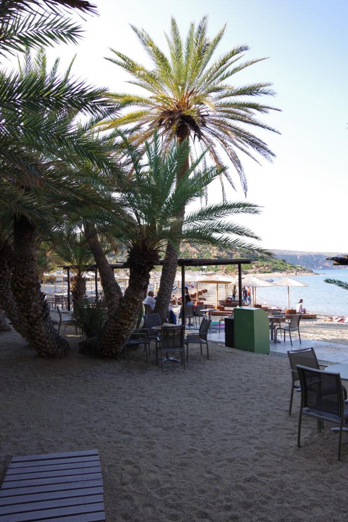 Strand mit Palmengruppe und Stühlen