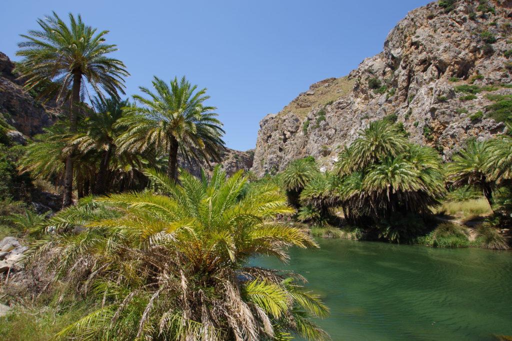 große Dattelpalmen neben Fluss, im Hintergrund Felswände eines Canyons