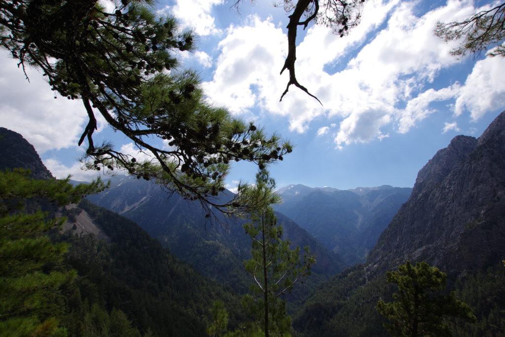 Gebirge mit grünen Wäldern bei sonnigem Wetter, im Vordergrund Teile von Ästen eines Nadelbaums