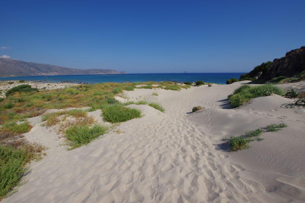 Helle Stranddünen mit grünem Bewuchs, dahinter das Meer