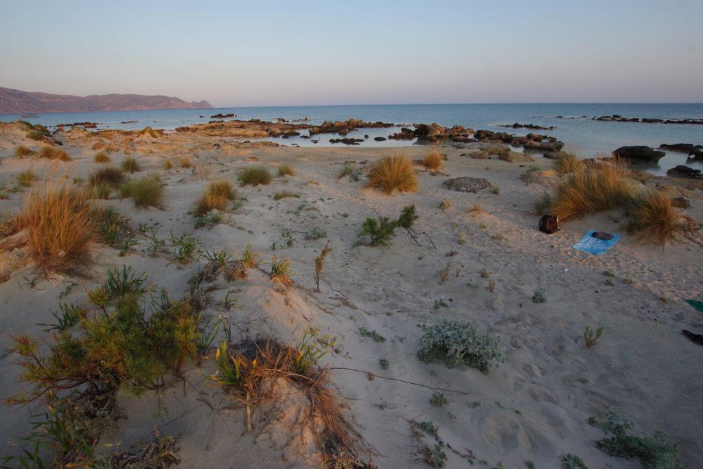 Leicht bewachsener Dünenstrand mit Blick aufs Meer in der Abendsonne
