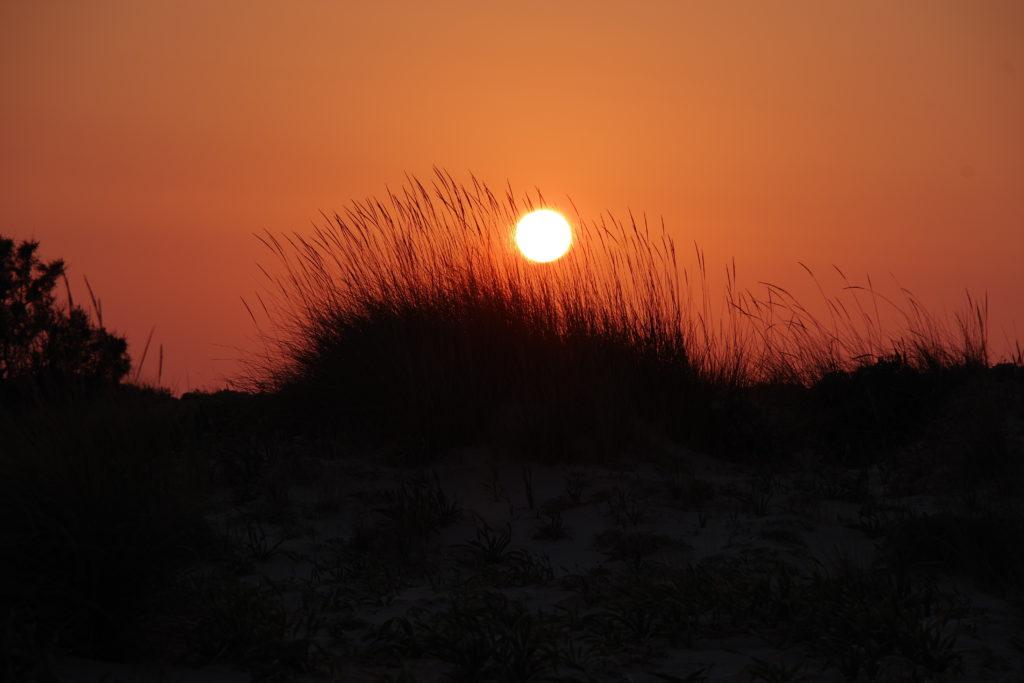 Untergehende, rötliche Sonne vor Sanddüne mit Grashalmen