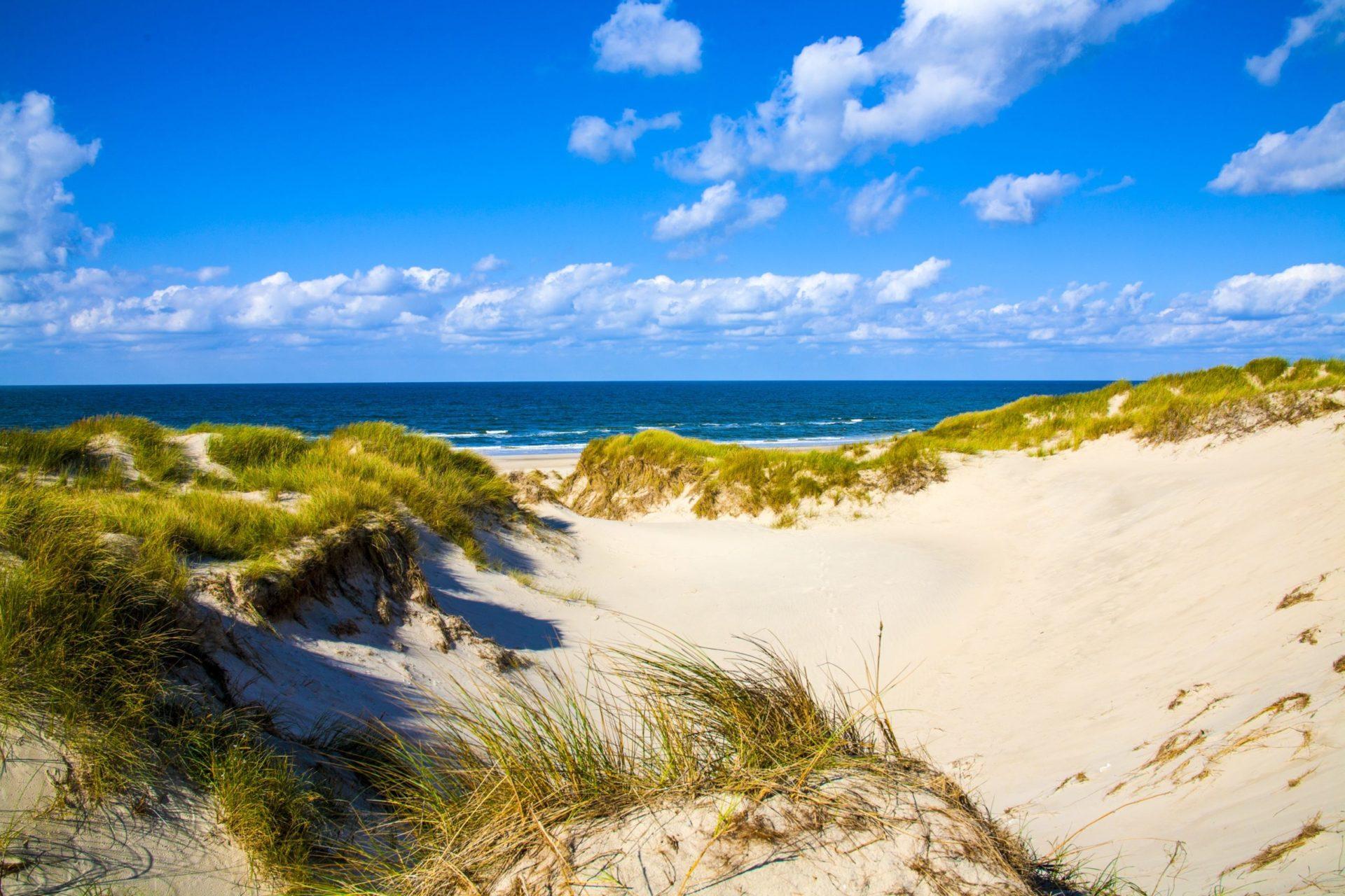 Wassertemperatur Dänemark: Sanddünen mit Dünengras an der dänischen Nordseeküste