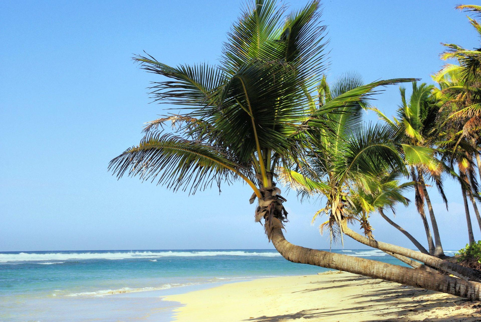 Wassertemperatur Kuba: Azurblaues Meer mit Sandstrand und Kokospalmen auf Kuba in der Karibik