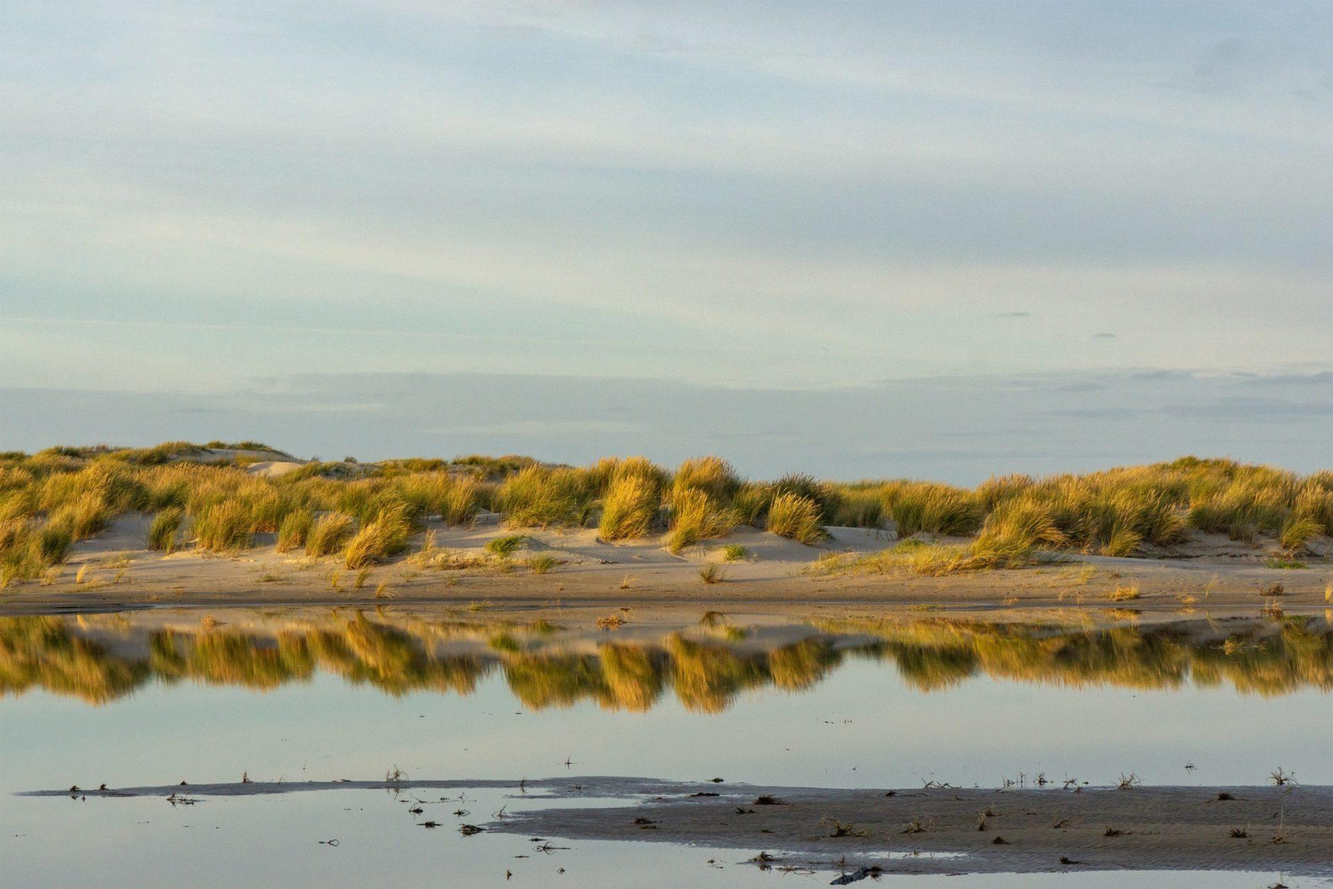 Wassertemperatur Norderney: Stranddünen mit Dünengras, welches sich im Meewasser spiegelt