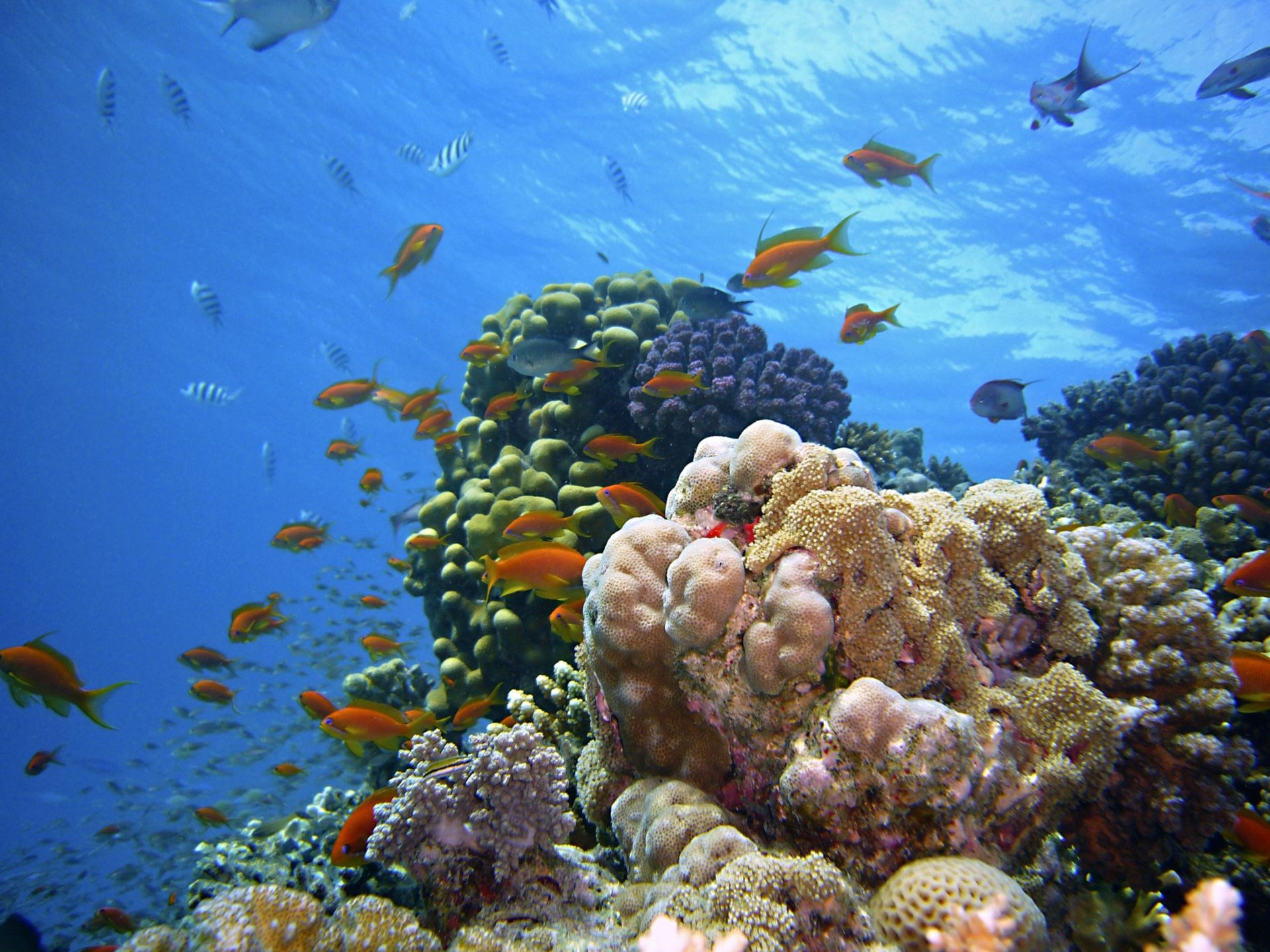 Wassertemperatur Soma Bay: Buntes Korallenriff mit Fischschwärmen und Schwämmen im Roten Meer